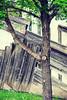 Lowertown Walk (lacemarielace) Tags: stpaul streetphotography lowertownstpaul minnesota grafitti urbandecay