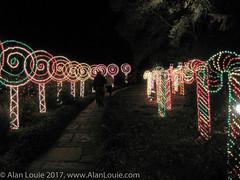 20031220 Bellingrath Xmas 0031 Lollypop row.jpg (Alan Louie - www.alanlouie.com) Tags: bellingrath christmas alabama theodore unitedstates us ussoutheast