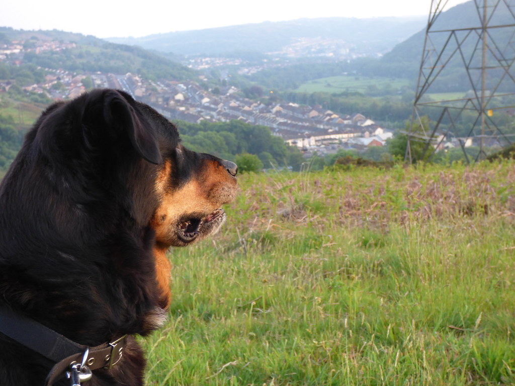 Dog Training Pontypridd