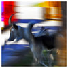 077 of 365 - Movement (Weils Piuk) Tags: photoblog365 dogs blur motion colors big saturation contrast abstract movement square dog animal wild life