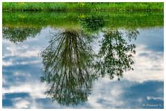 Sens dessus dessous (Pascale_seg) Tags: landscape paysage river riverscape étang reflets reflections envers tree moselle lorraine grandest france nikon nature earth spring printemps vert green groupenuagesetciel