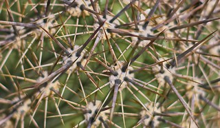 Thorns of wonder