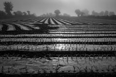 FRANCE (WeVe1) Tags: fog landscape monochrome contrejour brouillard si silhouets blackandwhite
