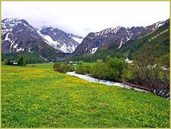 Bei Davos - Schweiz (magritknapp) Tags: gebirgsbach schnee 7dwfflorablumenwiese pradodeflores diente de león