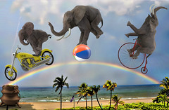 Pot of Gold at the End of the Rainbow for Elephants is Never Again Having to Perform Stupid Human Tricks in Captivity (Logan Pierson) Tags: elephant pacaderm circus tricks trained rainbow motorcycle beach ball vintage bike pot gold end fantasy babar tarzan ringling brothers trainer