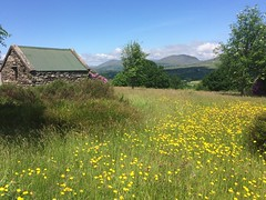 Idyllic country scene in Ireland (Lonfunguy) Tags: ireland countryside idyllic kerry