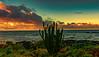 Cactus on Beach at Sunrise (Thanks for 1.2 million views) Tags: kauai poipu sky sunrise beach ocean waves cactus