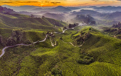 s 20180806_DJI AIR_BOH Tea Plantation Sunrise_Panorama1 (Andrew JK Tan) Tags: bohtea plantation sunrise dji djiair