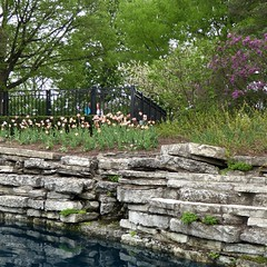 Lombard, IL, Lilacia Park, Pond Wall and Viewing Deck (Mary Warren 13.6+ Million Views) Tags: lombardil lilaciapark park garden nature flora plants blooms blossoms flowers spring pond water reflection stones wall limestone tulips lilacs fence trees