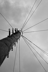 P52 Week 24 | Intersecting Lines (Steph*Powell) Tags: telegraphpole monochrome bw nikond5100