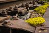 Boulonnée (patoche21) Tags: bourgogne bourgognefranchecomte cotedor chevignystsauveur europe fleur flore france nature photographie plante patrickbouchenard burgundy flower railway boulon bolt rouille rust fer iron