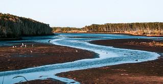 serene meandering wetlands__