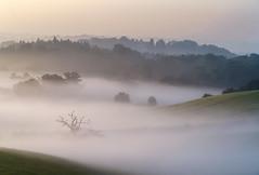 Weethley to Ragley on a Misty Morning (jactoll) Tags: weethley ragley warwickshire dawn dawnmist mist misty light landscape summer sony a7iii 70200mmf4 jactoll