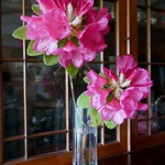 Du jardin, rhododendron hybride