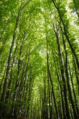 Cathedral (coastwalker) Tags: buchenwald jasmund nationalpark rügen unescoweltnaturerbe wald nature green coastwalker