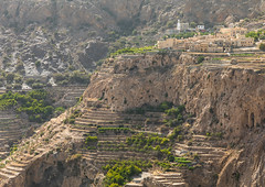 Old village with terraces to grow roses, Jebel Akhdar, Sayq, Oman (Eric Lafforgue) Tags: agriculture alhajarmountains aljabalalakhdar arabia arabianpeninsula beautyinnature colorimage day extremeterrain gulfcountries highangleview horizontal jabalakhdar jebelakhar jebelakhdar landscape middleeast mountain mountainrange nature nopeople nonurbanscene oman oman18002 outdoors photography rock rose ruralscene sayq sultanate terracedfield tourism traditionalculture tranquilscene tranquility travel traveldestinations