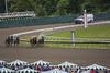 20180610_Race3_OutOfTurn (NJ RS) Tags: horses monmouth park