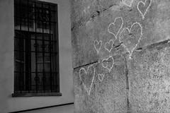 Pellegrino_Antonella_516#3
