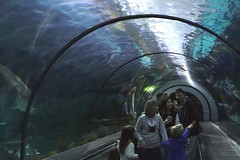 Shark Encounter (Prayitno / Thank you for (12 millions +) view) Tags: konomark shark encounter giant gigantic gigante aquarium dome glass tunnel walkway view viewing people ikan hiu underwater under water passage