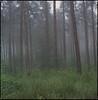 trees (steve-jack) Tags: hasselblad 501cm 80mm cb fuji reala 100 film 6x6 120 hertfordshire mist fog morning tetenal c41 kit epson v500