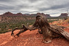 Juniper Stump in Red Rock Vista (chasingthelight10) Tags: events photography travel landscapes canyons rockformations places arizona sedona cathedralrock