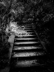 Walk To The Light (Solène.CB) Tags: bw black white nb noir blanc light walk lumière steps stairs solènecb london londres park parc hollandpark