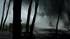 Une histoire d'ombre, de trouble et de lumière... (stephane.desire) Tags: ombre gens personne trouble arbre 169 tronc lumière