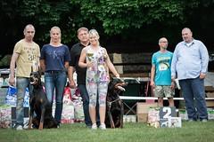 Fandango (zola.kovacsh) Tags: outdoor animal pet dog doberman pinscher dobermann club show
