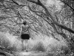 Surreal Forest (f.albertowilson) Tags: hawaii walking nature woman hiking forest tree blackandwhite bw kauai mahaulepu heritage trail poipu g85 panasonic lumix