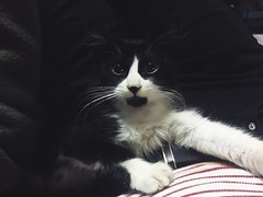 (maycambiasso98) Tags: argentina buenosaires animal white black love pet sweety sweet kitten little happy smile cat