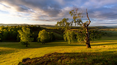 Зори Урала #своифото, #пейзаж, #природа, #утро, #рассвет, #дерево, #натура, #восход, #sunrise, #nature, #tree, #Landscape, #sun, #туман, #лучи, #foggy, (ЛеонидМаксименко) Tags: пейзаж восход утро лучи foggy tree nature landscape природа натура дерево sun рассвет своифото туман sunrise