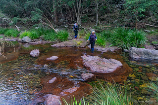 Green Gully Track: stepping stones