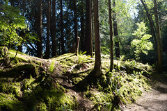 Mossy forest (quinet) Tags: 2017 canada vancouver britishcolumbia 124