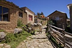 (Jbouc) Tags: southamerica isladelsol titicaca lake lac bolivia bolivie travel americadelsur latin amériquedusud