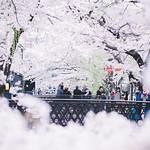 京都。 thumbnail