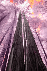 _KPJ8079 (Kate Jordahl) Tags: redwoods dream