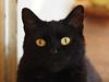 Kocio Kater cats cute (arjuna_zbycho) Tags: blackcat tuxedo tuxedocat kater hauskatze cat animal cute animals pets gato kitten feline kitty kittens pet tier haustier katzen gattini gatto chat cats kocio