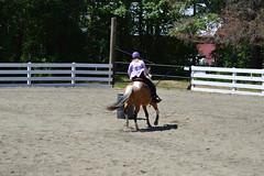DSC_4099 (Primespot Photography) Tags: show horse horseshow game games horsegames barrels barrells barrals barralls pony