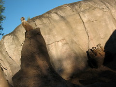 Suricatas (Sof-Xcaret24) Tags: temaiken suricatas animales fauna