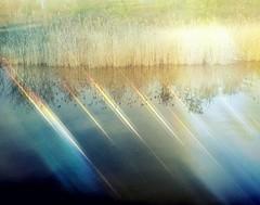 light on the lake (Hilarywho) Tags: lake marsh grasses light superimposed layered layers doubleexposure