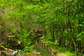 Canal del Pigüeña