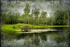 Lakeside Green (ulli_p) Tags: asia art artofimages aworkofart canon750d flickraward green isan likeapainting landscape lake lakescape nature ruralthailand southeastasia thailand texture textured texturedphoto