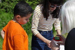 Edinburgh Botanic Gardens BioBlitz 2018 -78 (Philip Gillespie) Tags: • edinburgh royal botanic gardens 2018 big bioblitz bio blitz kids children men women man woman people fun faces smiles water wet insects bugs moths spiders legs arms eyes hats grass trees bushes plants short pool sun sky pond lilly wings park nature colour green blue red yellow orange purple science teach record check house cottage photo photography canon 5dsr rbgenature thebotanics dipping worms birds bigbotanicsbioblitz