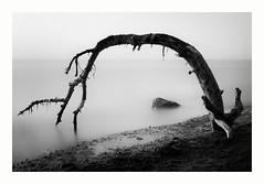 stranded (ddaugenblick) Tags: baltic sea ostsee weststrand dars wasser meer baum tree