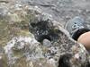 hole (terryhadalittlelamb) Tags: hole marblehead lighthouse lake erie ohio oh