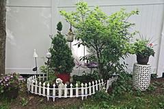 Back Yard Decoration at a Fence (hank278) Tags: backyard fence photoaday pad canoncamera canon tree bushes