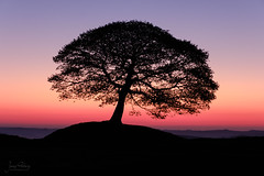 Stunning Silhouetted Tree