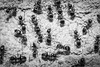 Formication (mikeyp2000) Tags: ant macro monochrome formication ants formicary insects closeup instect swarm infestation