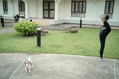 #07 (Sakulchai Sikitikul) Tags: street snap streetphotography summicron songkhla a7s sony thailand hatyai 35mm leica dog stretching