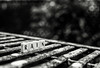 It's time for the rain (Himanshu Joshi Bangalore) Tags: bw blackandwhite monochrome nikon nikkor d610 50mm lightroom rain scrabble spell spelling word words still life silverefex silver efex pro bangalore india